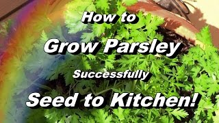 How to Grow Parsley - Complete Video to Seed, Feeding, Pest \u0026 Disease, Harvest, Storing