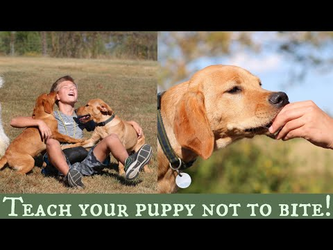 Stop Puppy Biting | My Top Three Training Solutions