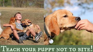 Stop Puppy Biting | Top 3 Training Solutions