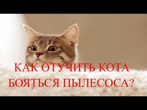 Как отучить кота бояться пылесоса?