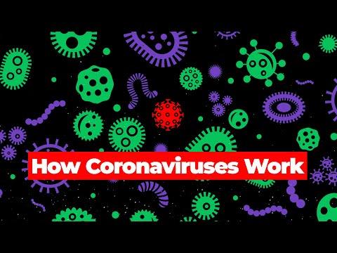 How Coronaviruses Work thumbnail