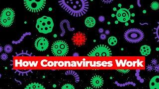How Coronaviruses Work