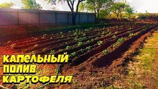 Капельное орошение картофеля | Собственными руками