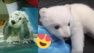 Watch the Cutest Animals in the World!! Baby Animals Compilation [2019]