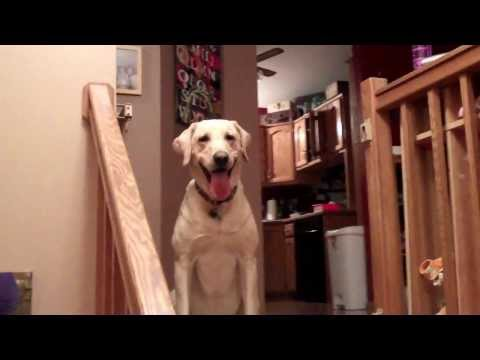 teach-your-dog-how-to-play-hide-and-seek
