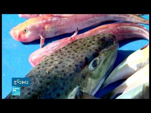 أسماك سامة تظهر في بحر غزة بسبب تفريعة قناة السويس الجديدة!  - نشر قبل 2 ساعة