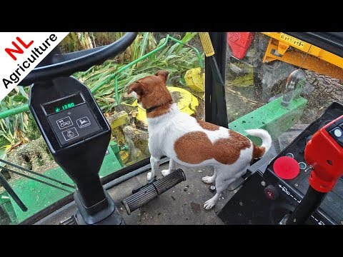 Mais Hakselen 2019 ● Cab View With Dog ● John Deere 5830 + Fendt's ● Niejoco ● Rhenen.