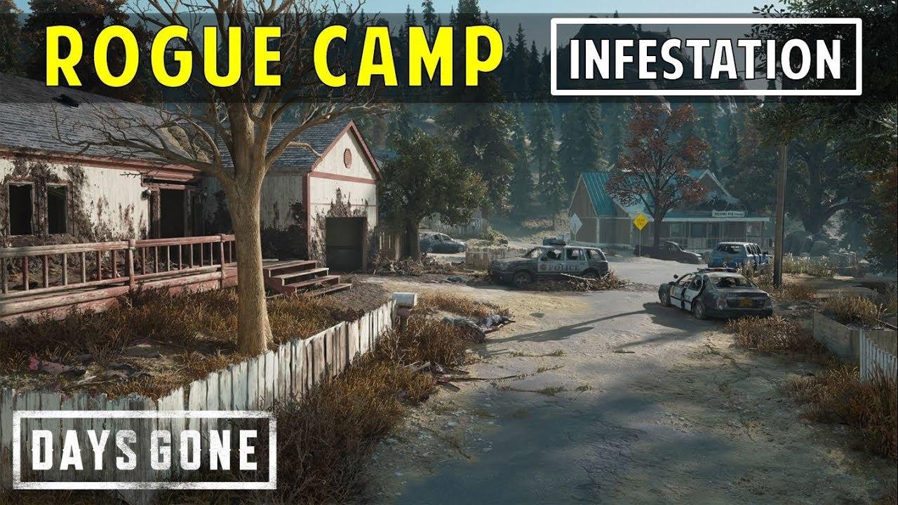 infestacion en campamento rogue