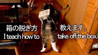 脱ぎ方を教えるねこ-maru-teaches-how-to-take-off-the-box