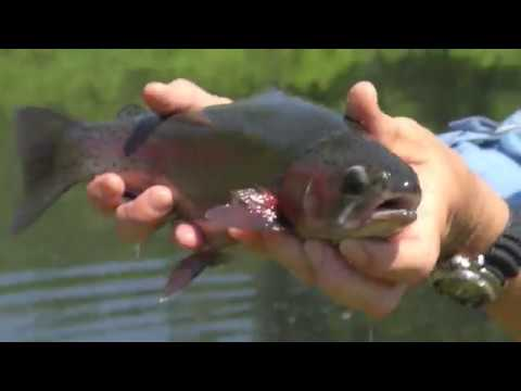 Plymouth Trout (Full Episode)