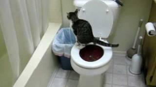 Saba's toilet training