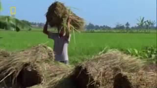 Юго Восточная Азия и Океания Документальный фильм National Geographic