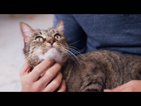 Cat Teeth Cleaning at Home | Petco