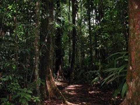 jurassic park jungle ambience sounds youtube. Black Bedroom Furniture Sets. Home Design Ideas