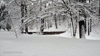 Трускавец прогулка по бульвару Торосевича зима 2018 (часть 2) winter in Truskavets