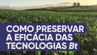 Como preservar a eficácia das tecnologias Bt