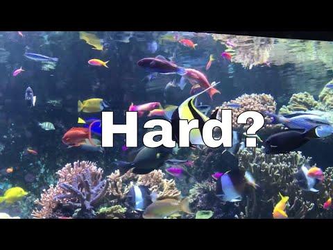 Keeping A Saltwater Aquarium Is EASY!