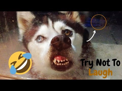 🔥Try Not To Laugh 😝- Funny Pets And Cute Animals Compilation - Funny Dog Compilation😍😅