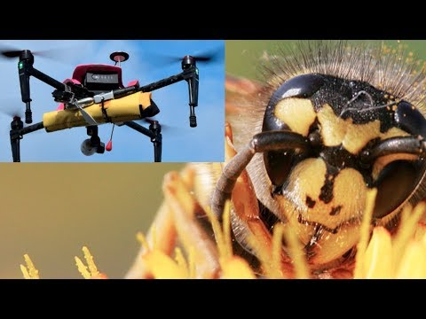 CAUGHT ON CAMERA: Hornet's nest sliced by drone!