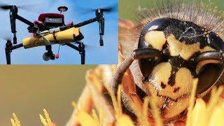 CAUGHT ON CAMERA: Hornet