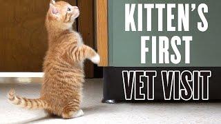 Kitten's First Vet Visit