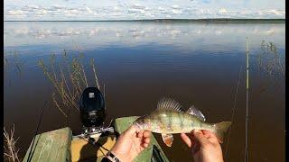 Рыбалка На Енисее рыбы просто тьма