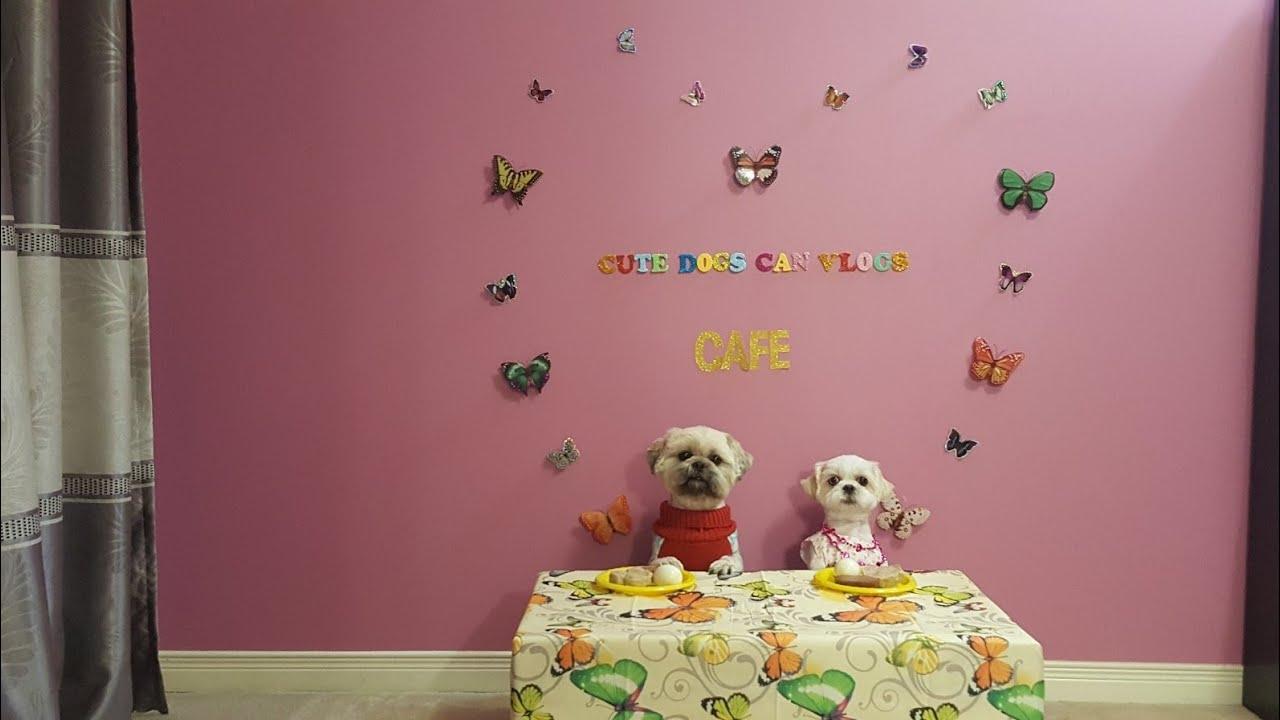 Chú chó Lucky hẹn hò Eva đi ăn tối, Lucky âu yếm Eva/Lucky&Eva dated for dinner, Lucky cuddledEva.