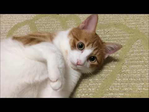 こっち向いて。 Turn around.『保護猫るる らら物語』