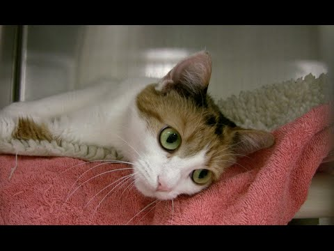 Pick Your Favorite: Cute Kittens from Northeast Animal Shelter