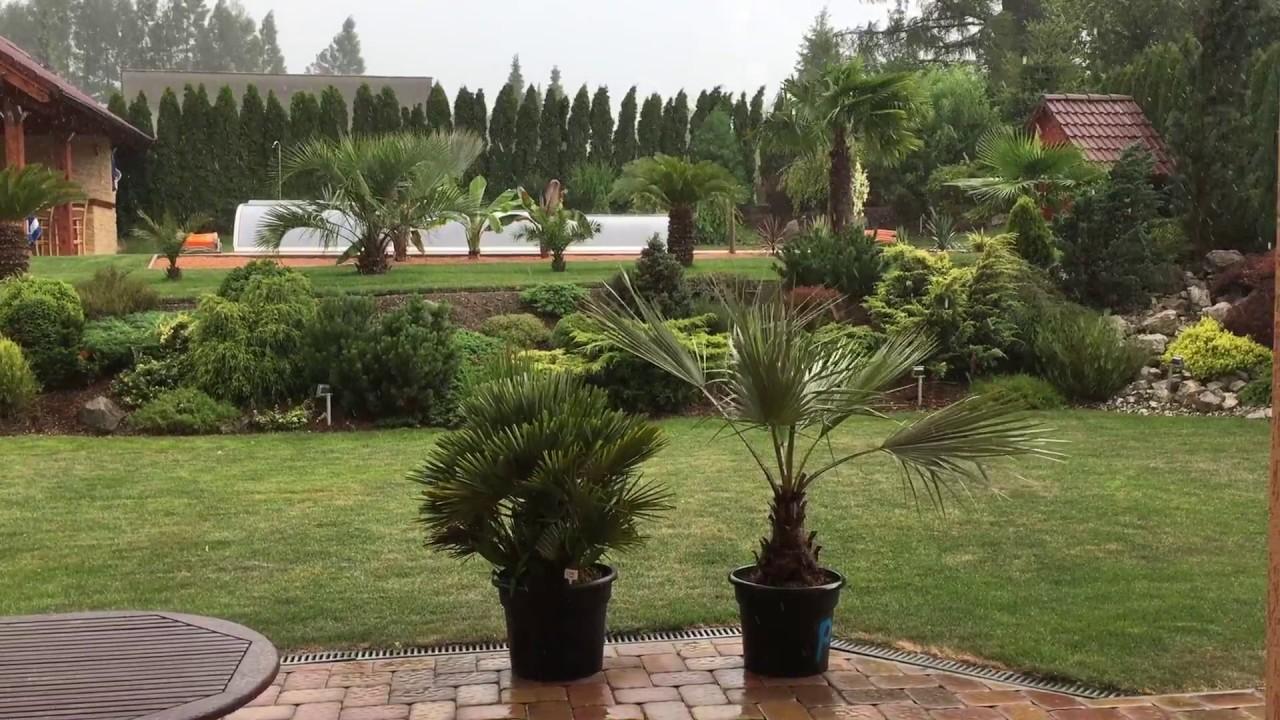 palmy a zahrady tropical garden rain storm czech republic june 25 2016 - Tropical Garden 2016