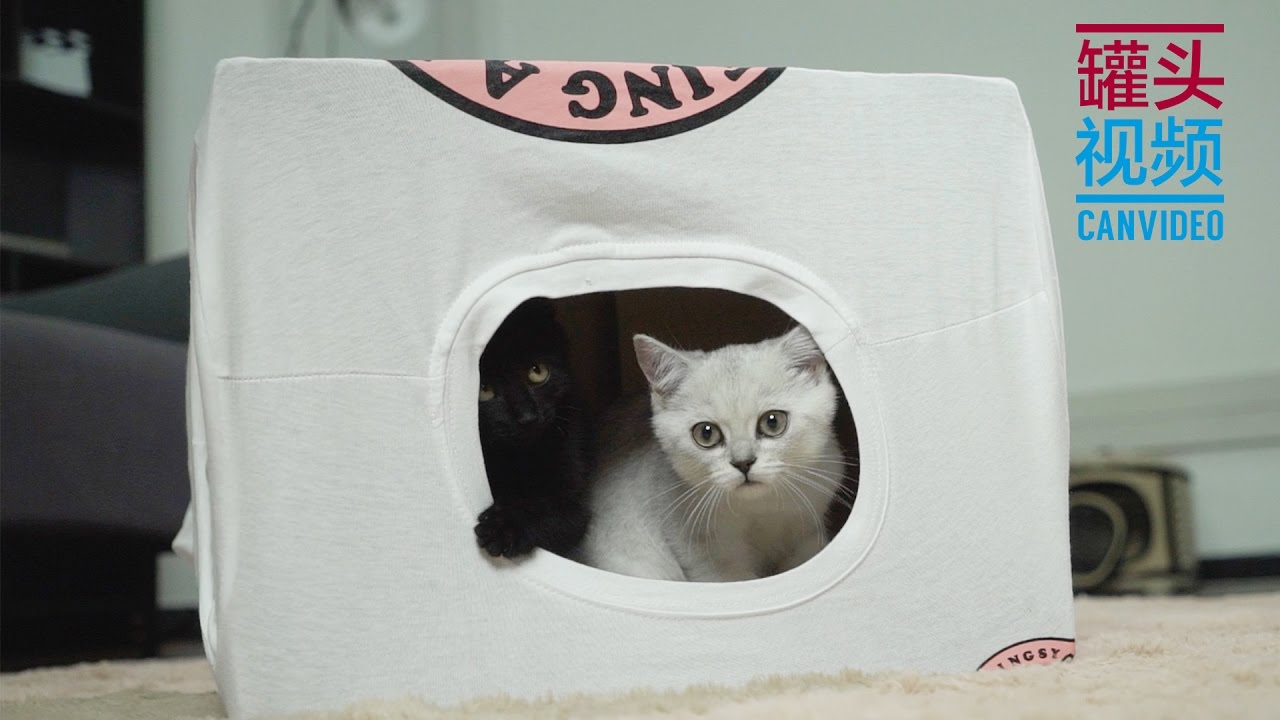 Download 【CanPet】DIY cat tent from old T-shirt & Paper box