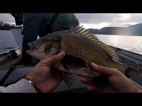 Tas Bream Classics: Derwent River -  6+kg Day 1 Bag