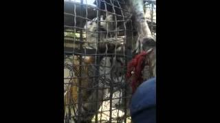 شجاعة الرجال في حديقة الحيوانات بالجزائر فقط