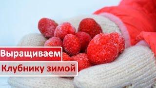 Выращиваем клубнику зимой(В данном видео вы увидите систему 3D земледелия , благодаря которой можно получать плоды клубники круглый..., 2016-10-21T14:31:25.000Z)