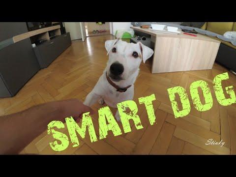 7 Dog Tricks (YI 4K +)