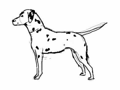 Cómo se dibuja un perro Dalmata - Dibujos de perros - YouTube