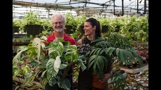 Ep 040: Selecting for Variegation - Plant One On Me