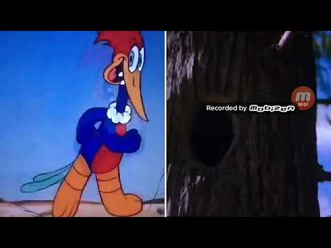 Woody woodpeckers Everybody Thinks l'm Crazy 1941 2018 ...