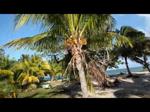 Drive from Placencia Village to The Placencia Resort in a Vanagon in Belize