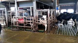 Robots on a Dutch dairy farm