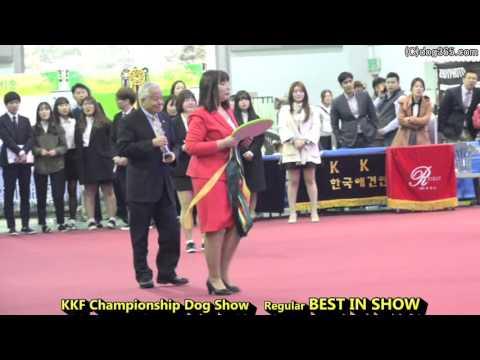 2016.03.27 Seocho FCI & KKF Dog Show