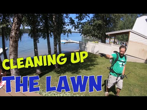 cleaning-up-the-undesirable-plants-in-the-lawn