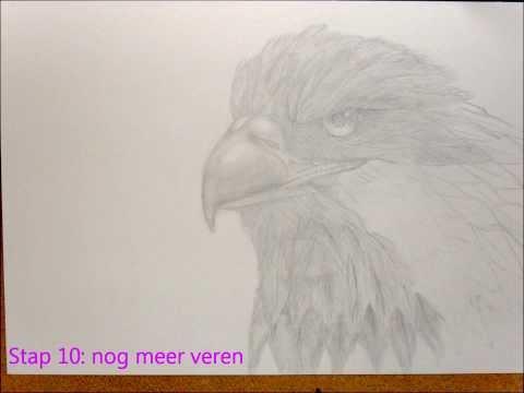 Myriam Meijer, drawings! (Bird/vogel Holland)