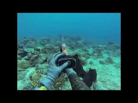 Spearfishing Philippines (Tabina, ZDS)