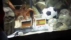 Orakel Krake Paul - Oktopus sagt Spanien Deutschland WM 2010 voraus