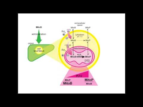 Mitochondrial reactive oxygen species in redox signaling and pathology by Mike Murphy
