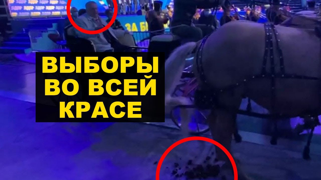 Провал Жириновского с конями, склероз Путина и икона на БТР