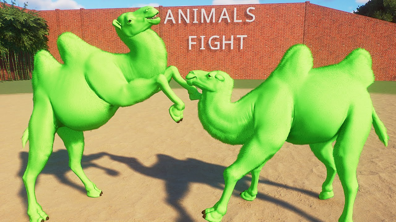 Colored Camle Fight in Planet Zoo | Planet Zoo Battle