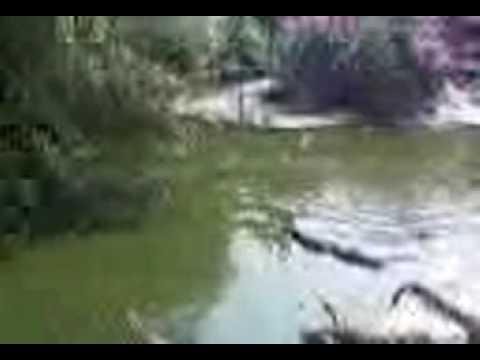 Trại cá sấu lơn nhất thế giới ở Thái Lan (14h30-25/01/2009).