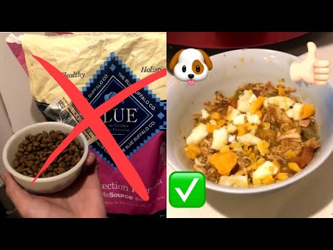 how-to-cook-dog-food-at-home-&-why---diy-homemade-healthy-dog-food-crockpot-recipe-&-cooking-tips